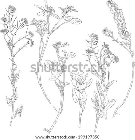 Set of line drawing herbs, wild flowers, hand drawn vector illustration - stock vector