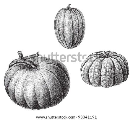 Set of melons - vegetable / vintage illustration from Meyers Konversations-Lexikon 1897 - stock vector