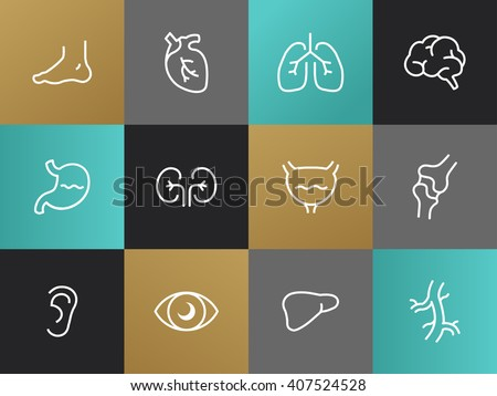 Set of modern vector Body parts plain simple thin line design icons and pictograms. Eyes, ear, limbs, heart, blood-vessels, lungs, brain, bladder, stomach, kidneys, locomotor system, intestinal tract - stock vector