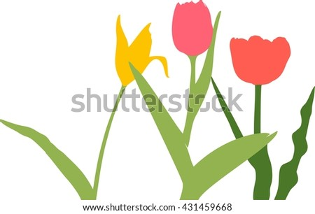 Set of Multicolored tulips. Different tulips. Set of spring flowers