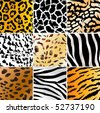Set of nine different wild animals skin patterns - stock vector