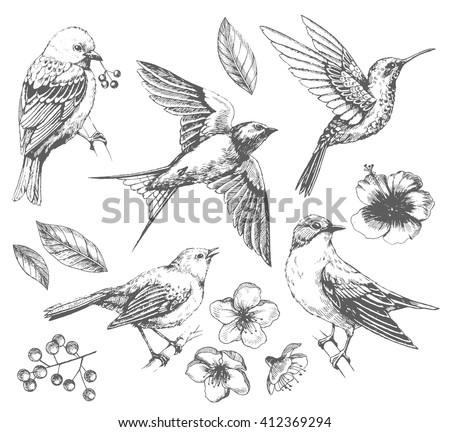 Set of  of birds and flowers, line drawings,  ink drawing, hand drawn  illustration, Vector - stock vector