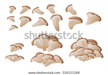 Set of oyster mushrooms