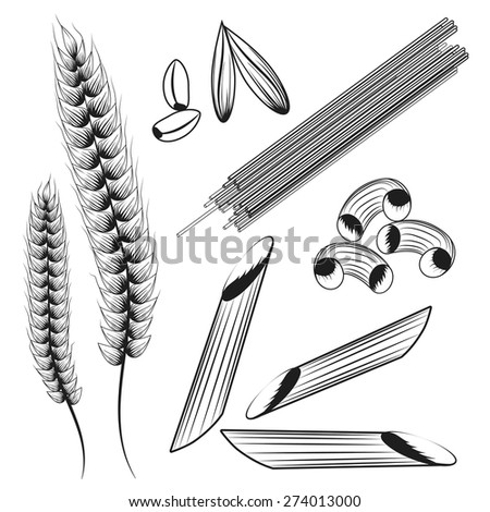 Set of 3 pasta types, ears of wheat and grain. Vector illustration - stock vector