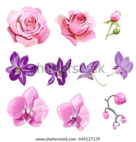 Set pink red purple flowers buds stock vector 2018 644127139 set of pink red purple flowers and buds roses orchid phalaenopsis mightylinksfo