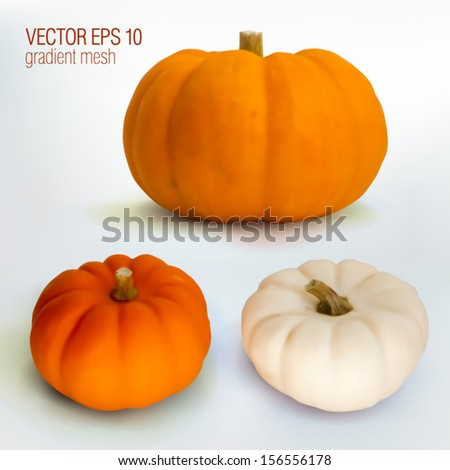 Set of pumpkins isolated, photorealism, vector EPS10 gradient mesh - stock vector