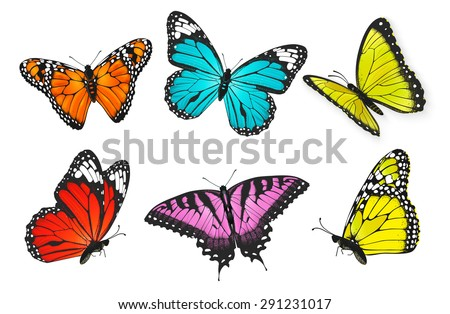 butterfly stock images royalty free images vectors shutterstock