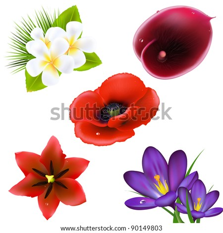 Set Of Realistic Flowers, Isolated On White Background, Vector Illustration - stock vector