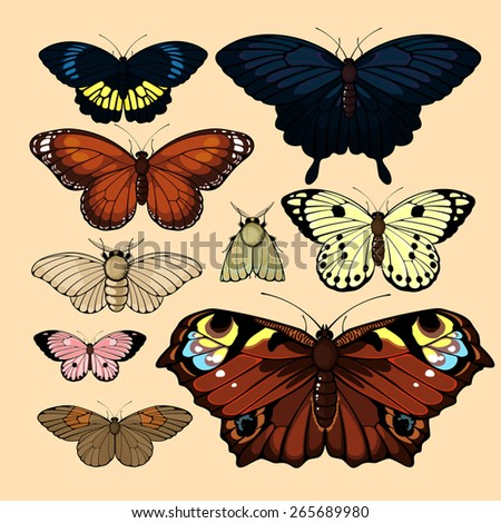 Set of realistic images of beautiful butterflies and moths, isolated on neutral background - stock vector