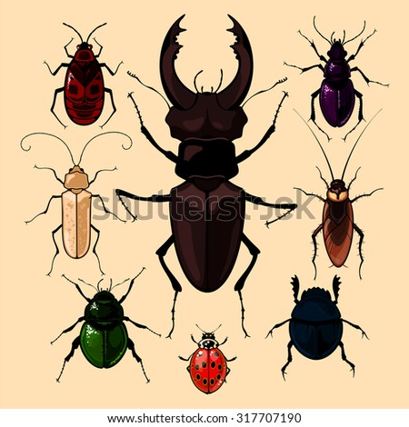 Set of realistic images of bugs, isolated on neutral background - stock vector