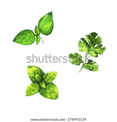 Set of realistic watercolor illustration herbs on white background vector