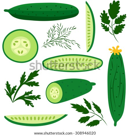 Set of ripe cucumbers made in flat style. Great for design of healthy lifestyle or diet. Single cucumber, half a cucumber, a slice of cucumber and various herbs. Vector illustration.