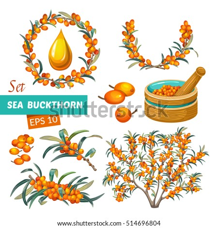 Set of sea buckthorn isolated on white background.