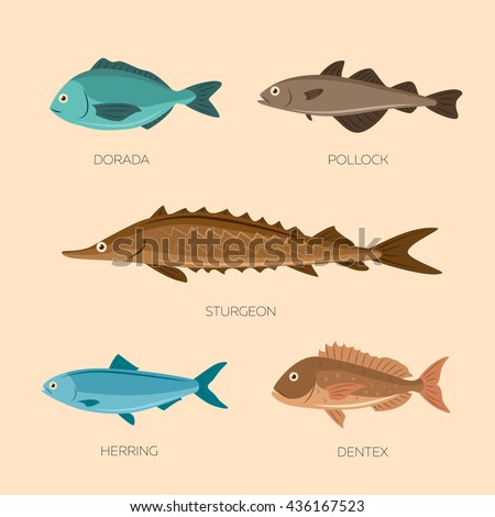 Haddock Stock Images Royalty Free Images Amp Vectors