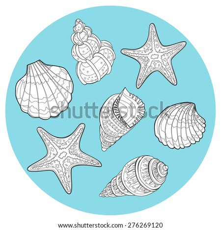 Set of Seashell - Illustration