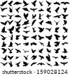 Set of 91 silhouettes of birds - stock