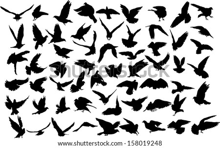 Set of 60 silhouettes of birds - stock vector