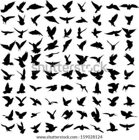 Set of 91 silhouettes of birds - stock vector
