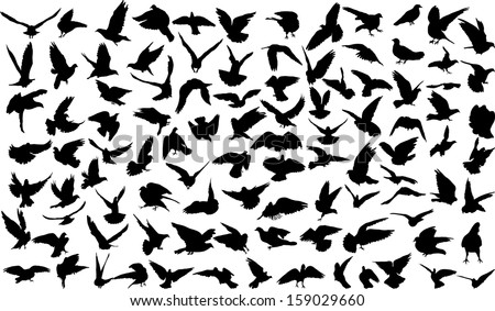 Set of 100 silhouettes of birds - stock vector
