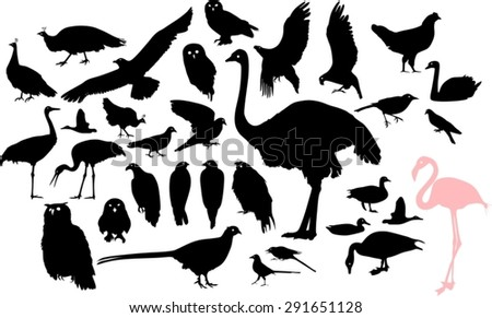 Set of silhouettes of different birds - stock vector