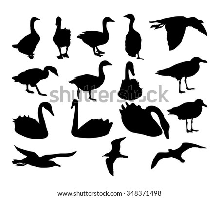 Set of silhouettes of swans, geese, seagulls. Vector illustration