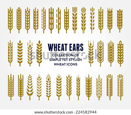 Set of simple and stylish Wheat Ears icons and design elements for beer, organic local farm fresh food, bakery themed design  - stock vector