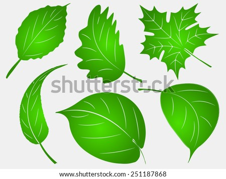 Set of six green leafs - stock vector