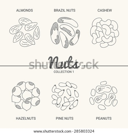 Set of six nuts. Almonds, brazil nuts, cashew, hazelnuts, pine nuts and peanuts in vintage style. Contour drawing vector illustration - stock vector