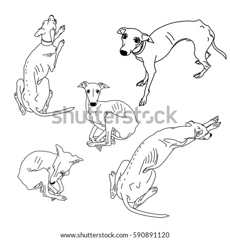 set of skinny italian greyhounds dog collection