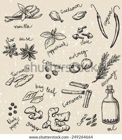 set of spices and herbs vector illustration  - stock vector