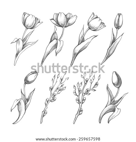 Set of spring flowers tulips branches. Pencil sketch collection vector illustration - stock vector