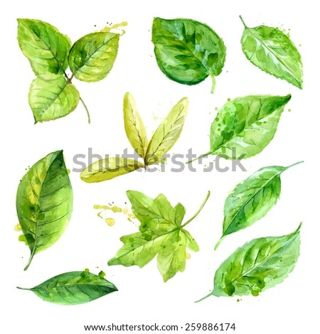 Set of spring leaves watercolorwith blots of paint. Vector - stock vector