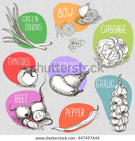 Set of stickers in sketch style, food and spices, old paper textured background. Eggplant, onions, cabbage, garlic, tomato, pepper, radish, turnip, beets. Hand drawn vector illustration. - stock vector
