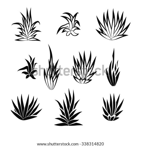 Set of succulent plant, flower isolated on white background. Vector illustration. - stock vector