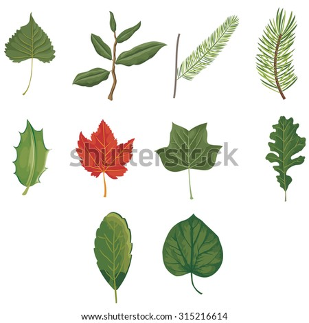 Set of ten green and red leaves
