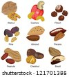 set of the most popular nuts on a white background - stock vector