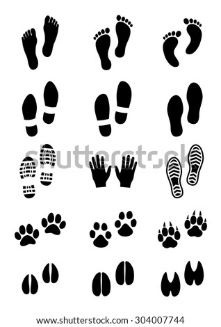 Tiger Paw Stock Photos Images Amp Pictures Shutterstock