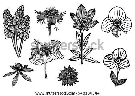 set of the wild flowers. Vector illustration on line art style, isolated on white