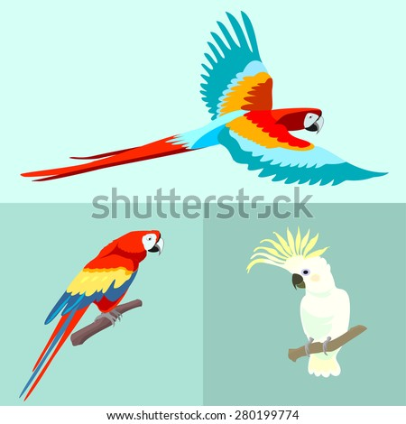 Set of three birds parrots Ara Macao and Kakadu. Bird in flight and sitting on a branch. Bright beautiful exotic creatures. Vector. - stock vector