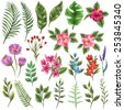 Set of traditional and tropical flowers and leaves - stock vector