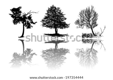 Set of tree silhouettes with reflection, vector - stock vector