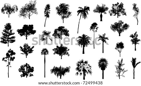 Set of trees and palm trees - stock vector