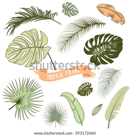 Set of trendy Tropical leaves, Vector illustration - stock vector