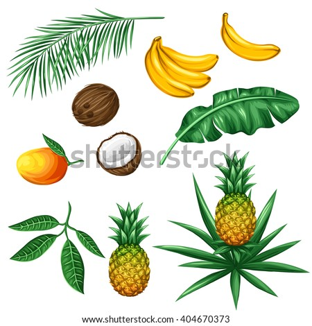 Set of tropical fruits and leaves. Objects for decoration, design on advertising booklets, packaging, menu, flayers.