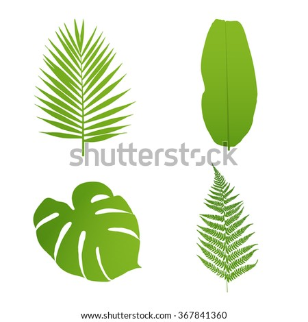 Set of tropical leaves. Palm,banana,fern,monstera. Vector  illustration. - stock vector