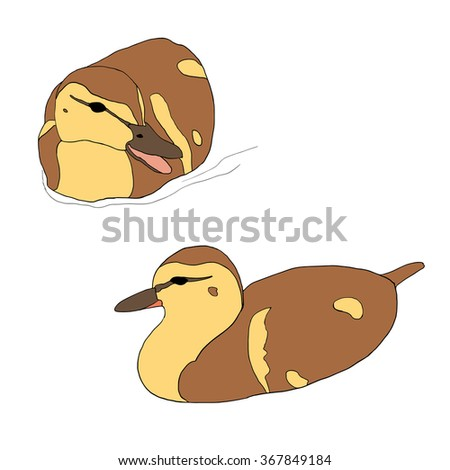 Set of two cute ducklings isolated on white. Vector illustration of two little ducks floating on the water. Hand drawn domestic birds - stock vector