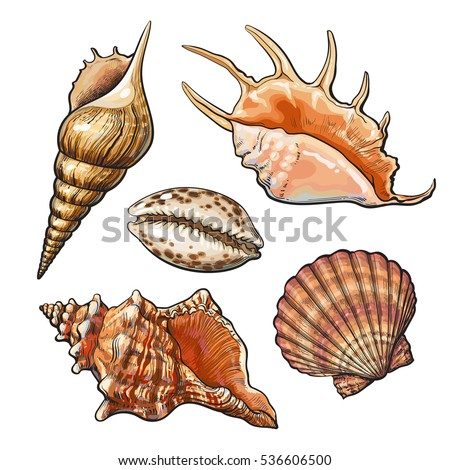 Shells Stock Images Royalty Free Images Amp Vectors