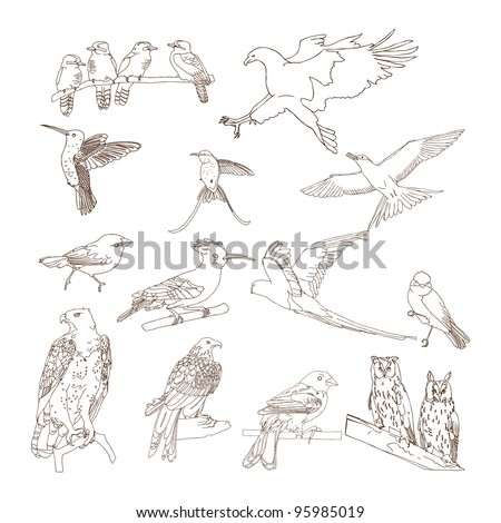 set of various birds. Hand drawing- vectorized - stock vector