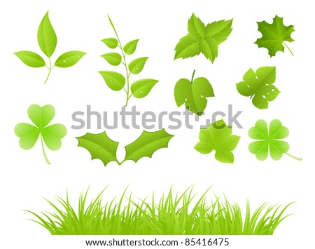 Set of various green plants, young saplings. Vector illustration, isolated on a white.