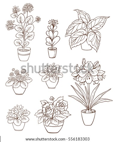 set of various houseplants on a white background violets and geranium in flower pot